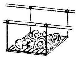 Как дома посушить грибы