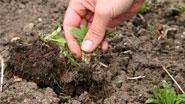 Миниатюра к статье - Борьба с сорными травами. Обработка почвы.