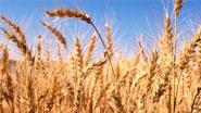 Миниатюра к статье - Обработка земли под яровые хлеба | Овсинский И.Е.