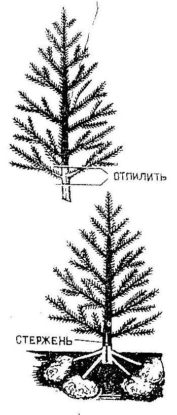 Как сделать крестовину для елки