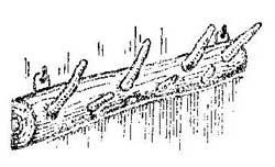 Как сделать вешалку из корявого ствола дерева