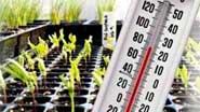 Миниатюра к статье - Чувствительность растений к температуре, воздуху, влаге