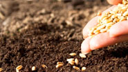 Миниатюра к статье - Как сеять, чтобы получить обильный урожай
