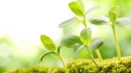 Миниатюра к статье - Реакции растений на свет
