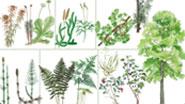 Миниатюра к статье - Реакции высших растений на внешнее раздражение