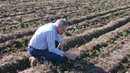 Миниатюра к статье - Задача обработки земли